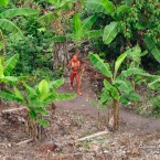 This man, painted with annatto seed dye, is in the community's garden, surrounded by banana plants and annatto trees. (Image: Gleison Miranda/FUNAI/Survival)