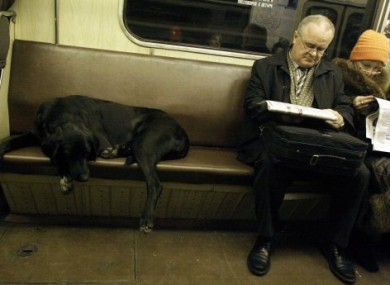 An apparently stray dog rides on the Moscow subway.