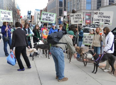 Members of the American-European Greyhound Alliance protest at the Irish consulate in Boston yesterday.