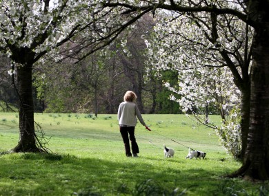 A woman walks her dogs in Red House Park, Birmingham, where temperatures exceeded 20°C today on the hottest day of the year so far.
