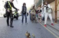 Caption competition: The safe quack code