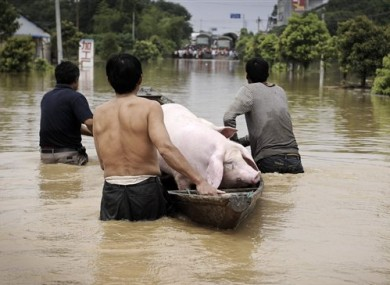 Villagers transport a pigs from a flooded pigpen in eastern China's Zhejiang province yesterday.