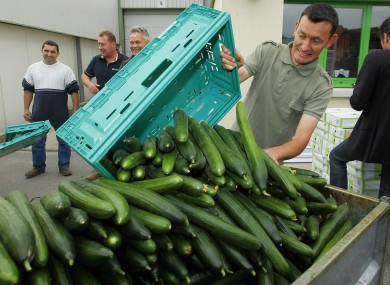 A French farm worker dumps cucumbers after failing to sell them at market, as the European E. coli scare continues.