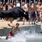 Revellers jump into the sea followed by a bull, during the Bulls to the Sea festival in Denia, Spain (AP Photo/Fernando Bustamante)