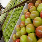 A judge inspects apples at the Illinois State Fair (AP Photo/Seth Perlman)