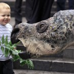 Winny Saur, the Australian Museum's robotic Muttaburrasaurus, makes friends with two-year-old Matthew Kealy in Sydney (AP Photo/Rick Rycroft)