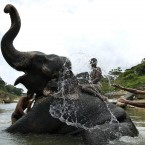 Elephant attendants bathe their elephant in Kandy, Sri Lanka (AP Photo/Eranga Jayawardena)