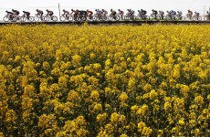 La Vuelta: Cobo storms to the summit to put Wiggins' dreams in doubt