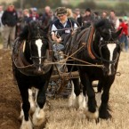 Godfrey Worrell from Kildare and his Dublin Cob horses take part in the horse category of the National Ploughing Championships in Athy, Co Kildare.  Niall Carson/PA Wire/Press Association Images<span class=
