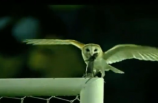 WATCH: An owl eat a rat during Colombia v. Venezuela