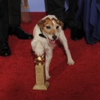 The pooch celebrates The Artist's Golden Globes win in January. (AP Photo/Mark J. Terrill/PA Images)