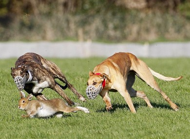 Dog Chasing Cat Laws Uk
