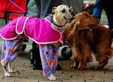 Here's a dog in pyjamas at the Crufts 2012 show in Birmingham today. No further comment.