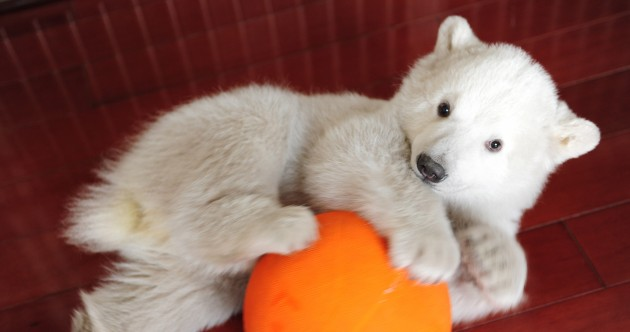 In pictures: Polar bear cub hand-reared in China