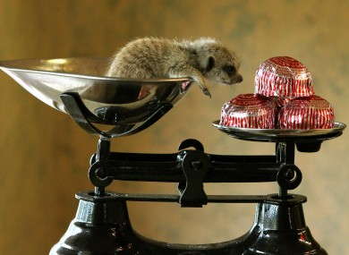 Tunnock, a three-week-old meerkat is weighed at Blair Drummond Safari Park. He weighs the same as four tea cakes.