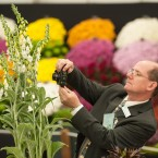 A visitor photographs a Digitalis 'Silver Cub' in the flower show's Great Pavilion. (Dominic Lipinski/PA Wire)