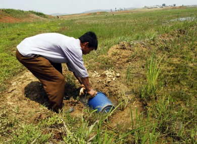 A North korean farmer gathers water as he tries to irrigate a field this week