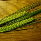 Barley: Stuffed full of fibre, manganese, tryptophan and more, barley is nutrient dense. It feeds friendly bacteria into the digestive tract, decreasing the risk of colon cancer and it is said to reduce cholesterol. (Liz West/Flickr)