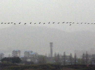 Birds fly across the demilitarised zone along the border between North and South Korea.