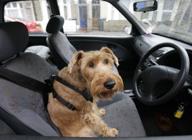You should probably make sure your pet is restrained and that they're not driving either. (File photo)