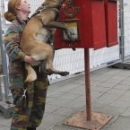 A Belgian army soldier lifts a dog to sniff inside of a mailbox during security checks outside of an EU summit in Brussels. That looks comfortable. (AP Photo/Yves Logghe)