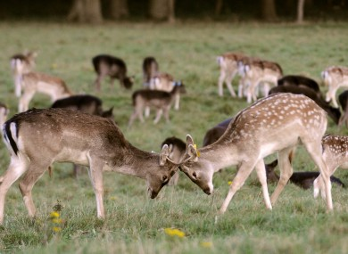 Some deer in the Phoenix Park this week. Definitely not a metaphor for some of the discussions on the site.