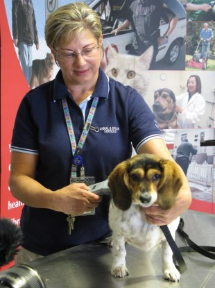 Karen Brick from the Animal Services Centre, demonstrates on a live dog how they search for tags, microchips or tattoos in Calgary