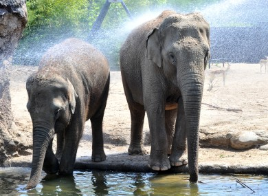 Keepers keep elephants cool at Dublin Zoo this week.