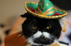 Sombreros look better on animals, and these photos prove it