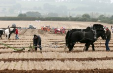 Survey finds 63 per cent of farmers agree with abortion legislation
