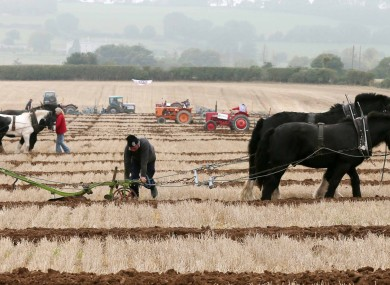 The National Ploughing Championships 2013.