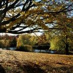 Phoenix Park, Dublin. <span class=