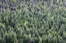 IMPACT warns Bord na Mona merger would give Coillte a 'weak voice'