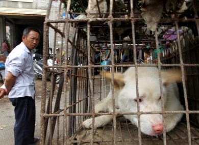 A dog waits to be sold for meat in a market in Yulin in south China's Guangxi Zhuang Autonomous Region