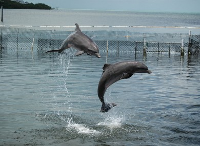 File photo of neutral dolphins