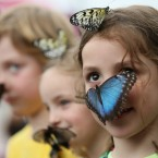 Isla Roberts looks at photographers as a large blue Morpho butterfly lands on her face, as she and other children take part in a media call for a new exhibition on tropical butterflies in a temporary venue outside London's Natural History Museum.<span class=