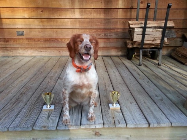 My proud little pup won runner up for best young dog and first place for best retriever. The face. - Imgur