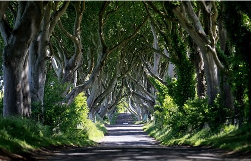 dark hedges AP Photo Peter Morrison