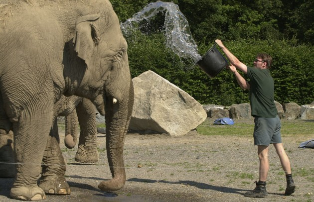 Elephant keeper Ken Mackey & Judy the Indian Elephant
