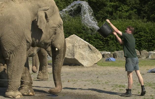 Elephant keeper Ken Mackey & Judy the Indian Elephant