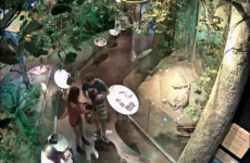 Couple caught on camera stealing a model dinosaur from a museum
