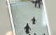 Do you find turn-by-turn directions a bit boring? Try following penguins instead