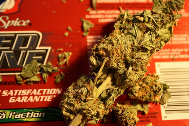 decriminalization of marijuana in canada essay Decriminalization of marijauna decriminalization of marijuana it can also be noted that these efforts are being taken up by the marijuana party of canada whose.