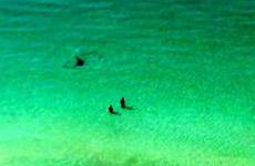 People paddling in Florida totally unaware of shark just metres away