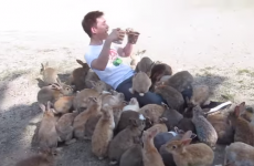 This huge swarm of fluffy bunnies is either your biggest dream or worst nightmare