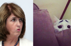 """Joan Burton reprimanded by animal rights group after """"skin a cat"""" comment"""