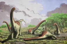 Another new species of dinosaur has been discovered