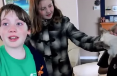 Little boys are overjoyed during emotional reunion with their cat