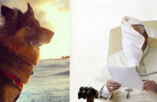 11 majestic dogs handling the wind way better than you