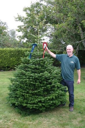 No Faking It The Art Of Growing A Real Christmas Tree